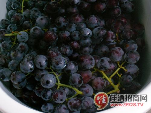 流程图详解家酿美味葡萄酒步骤